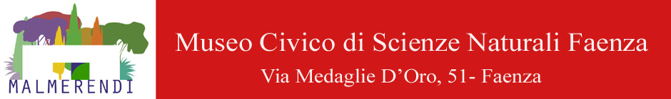 www.museoscienzefaenza.it